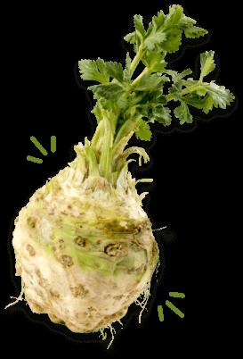 Kvrgavi celera