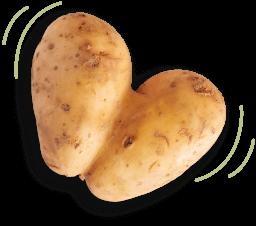 Kvrgavi krumpir
